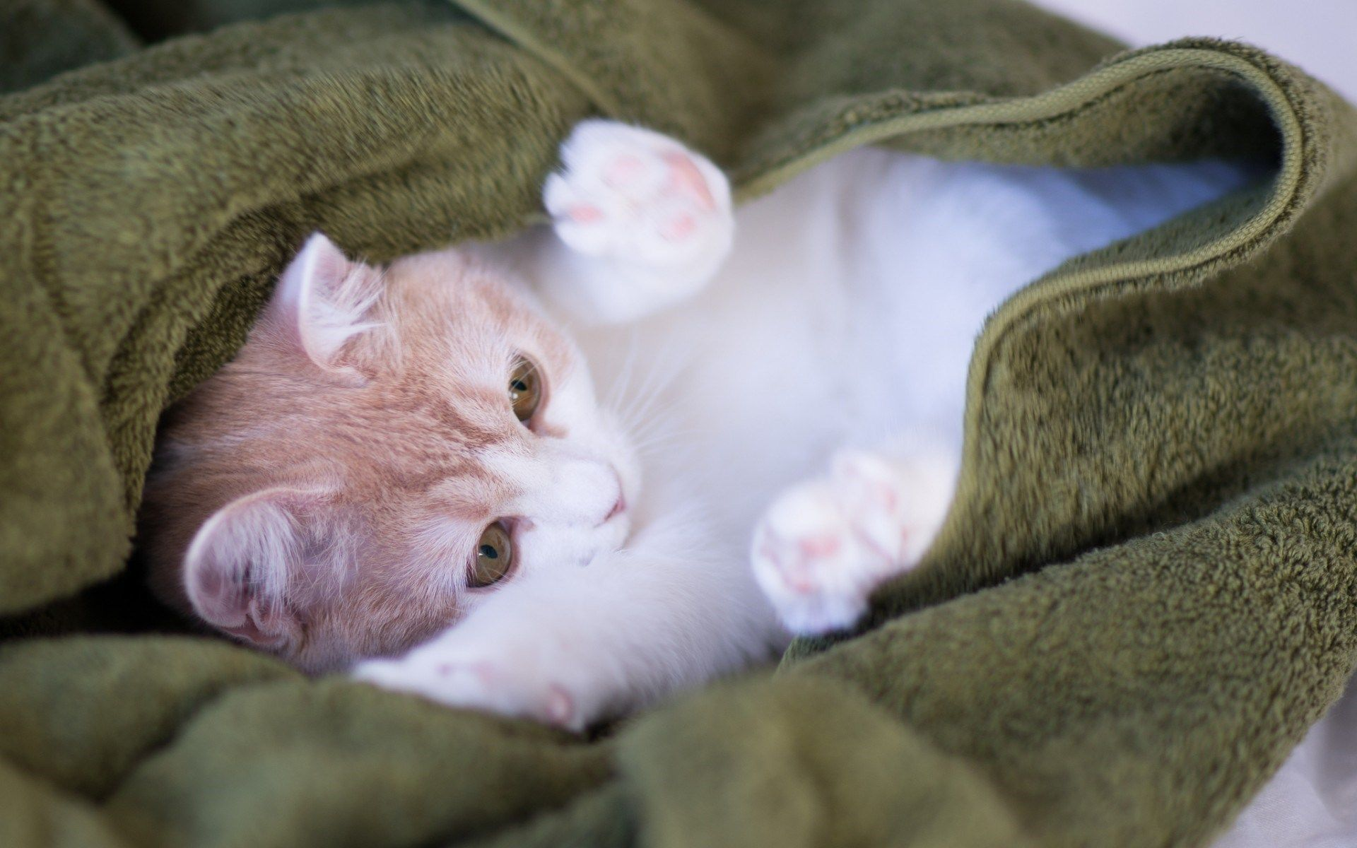 Sweet Cat One Reason That Kittens Sleep So Much Is Because A Growth Hormone Is Released Only During Sleep Cats Sleeping Kitten Cats And Kittens