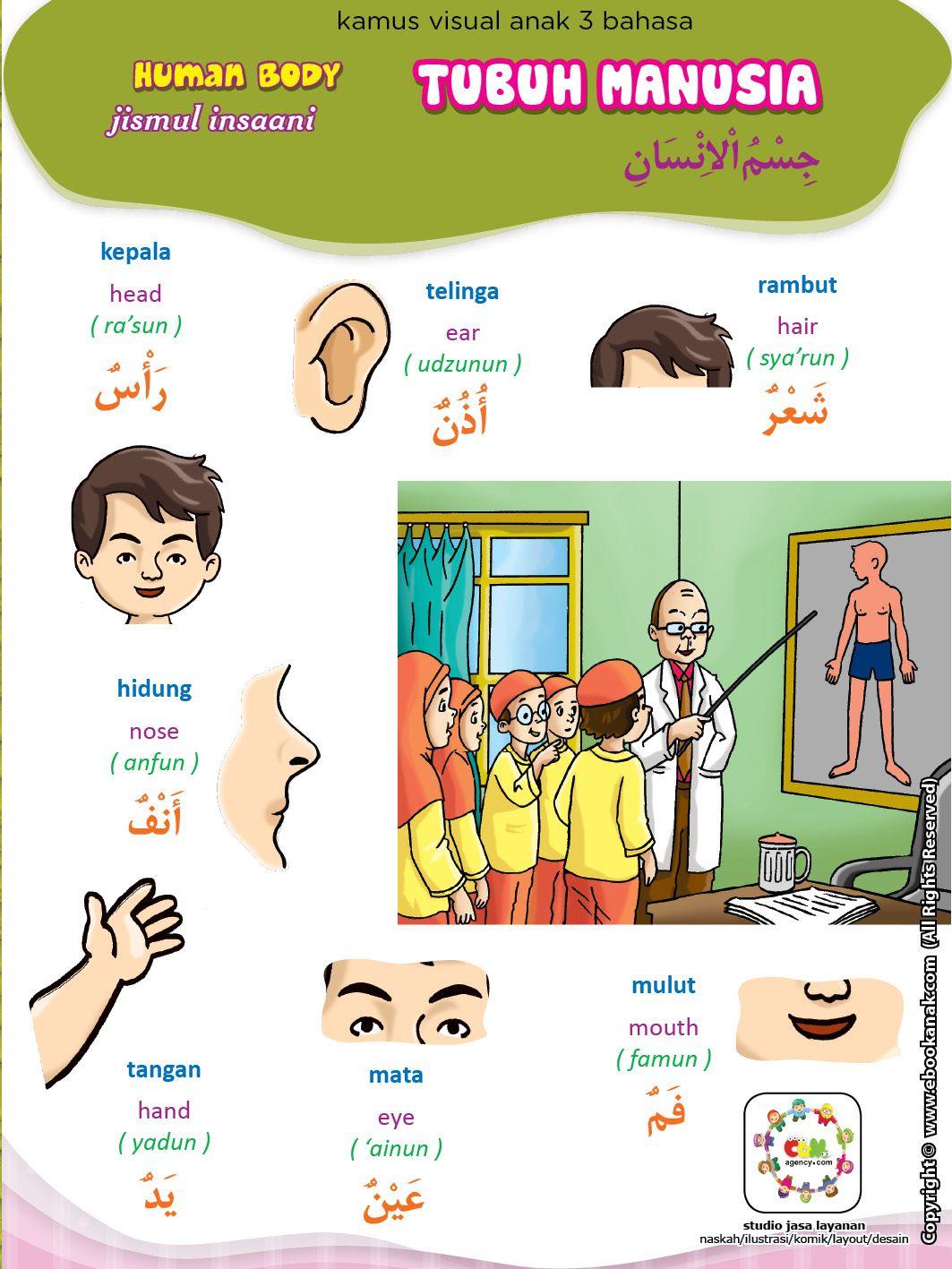Tubuh Manusia (1) Tubuh manusia, Manusia, Bahasa