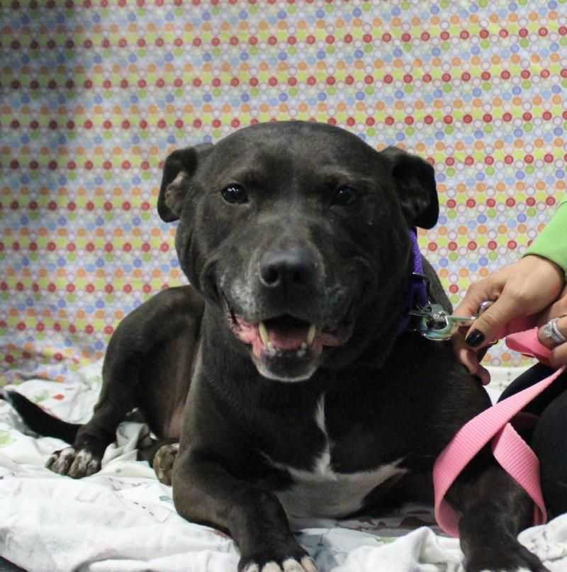 Meet Ramona A Petfinder Adoptable Labrador Retriever Dog Redford Mi Ramona Recently Came To Us Because Dog Adoption Labrador Retriever Dog Dogs