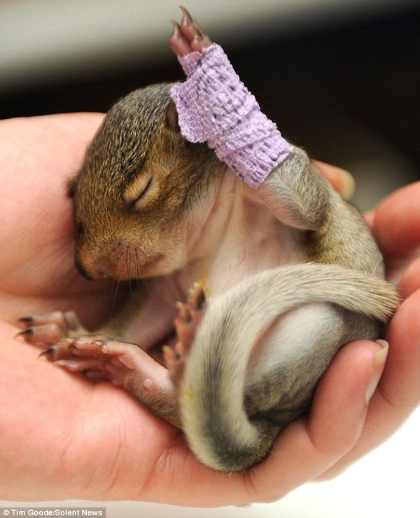 awww...tiny little baby squirrel with a tiny little purple cast