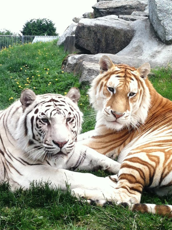 A Night of Big Cats and Crazy Travel Stories Animaux