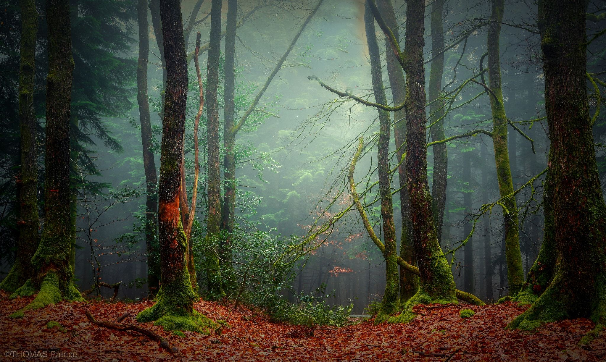 Moody forest! - null