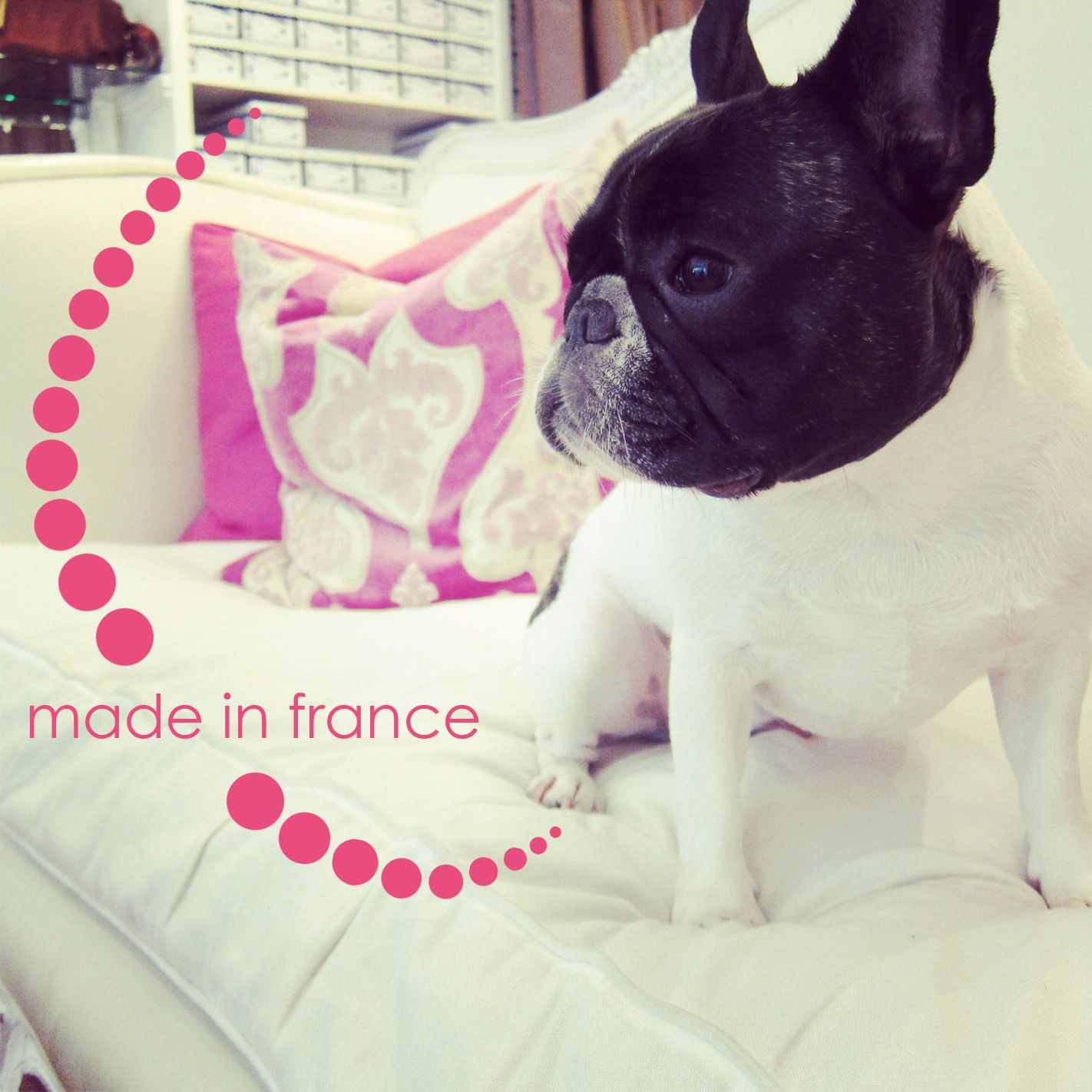 French Bulldogs At London Sole San Francisco Looks