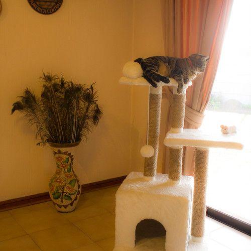 Rascadores Para Gatos Comprar O Fabricar Con Imagenes