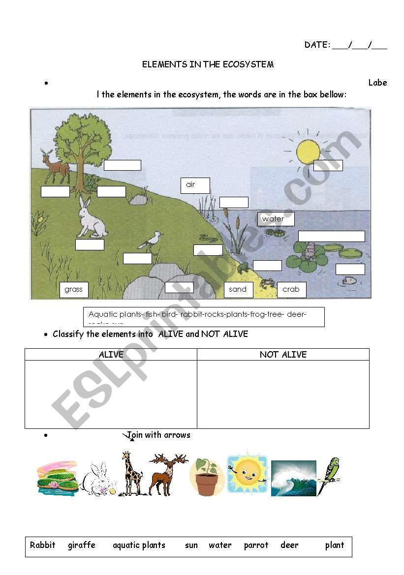 Elements In The Ecosystem Esl Worksheet By Carucha Ecosystems Kids Worksheets Printables Earth Science Activities