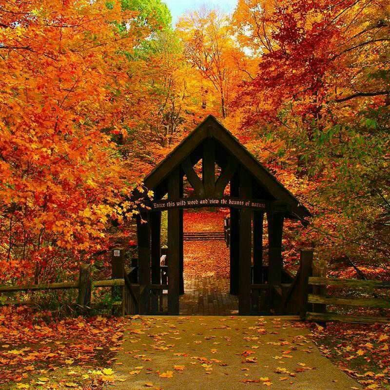 Pin by Marsha Humphreysbadgett on glorious fall scenery
