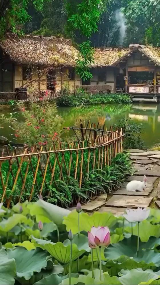 A beautiful nature house 🏡