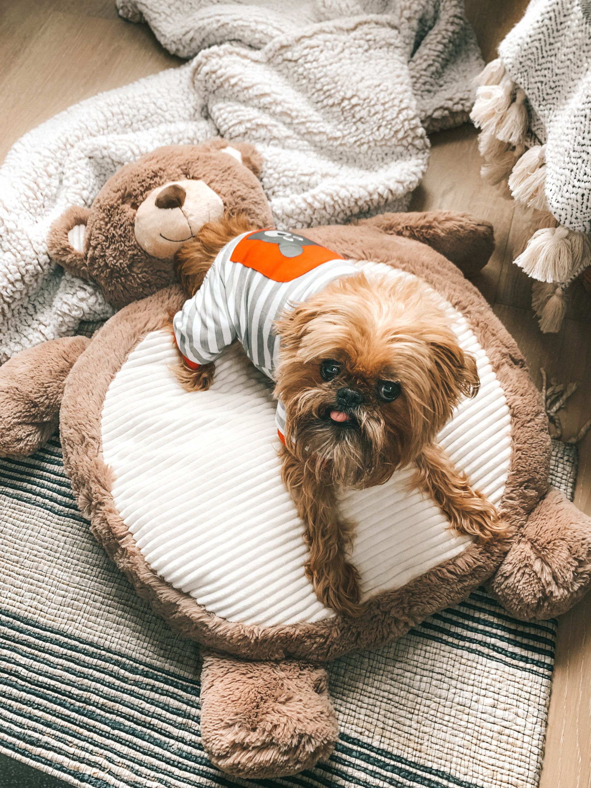 Pamper Your Pet On A Budget In 2020 With Images Bloggers Favorite Your Pet Pet Beds