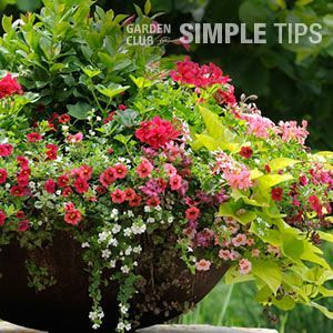 5 Container Design Tips from the Pros | Garden Club: Five Keys to Container Design: 1. #Focal #Point. Every garden needs a centerpiece. Containers are no different. Pick one dramatic or large plant as the main attraction. Fountain grasses and tropical plants such as elephant ears, banana trees, crotons and cannas are thrilling. Build your containers around them. 2. #Color. From the container you choose to the plants within it, color is the first thing peop #elephantearsandtropicals