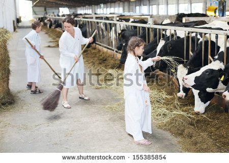 Many Cows Stockfotos und -bilder   Shutterstock
