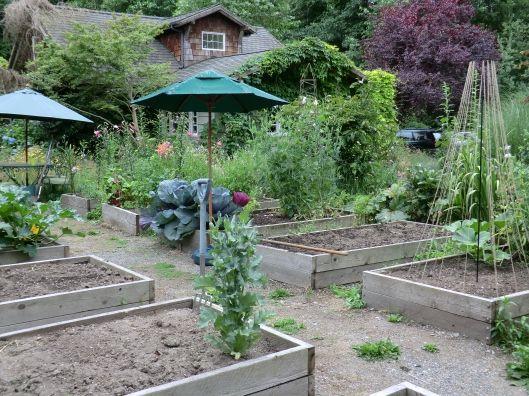 Vegatable Garden Liveconsciously Live Consciously