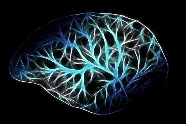 Foto estilizada del cerebro