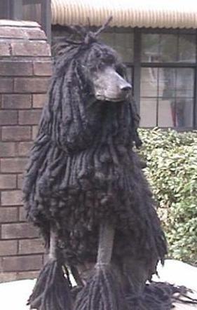 Love Your Cords Poodle Dreadlocks Poodle Poodle Dog Black