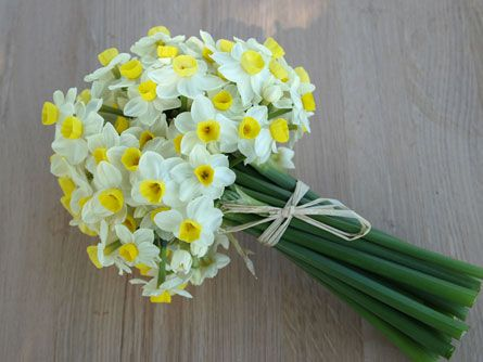 Narcissus Similar To Daffodils But With A Smaller Flower Daffodil Bouquet Flower Bouquet Wedding Daffodil Wedding