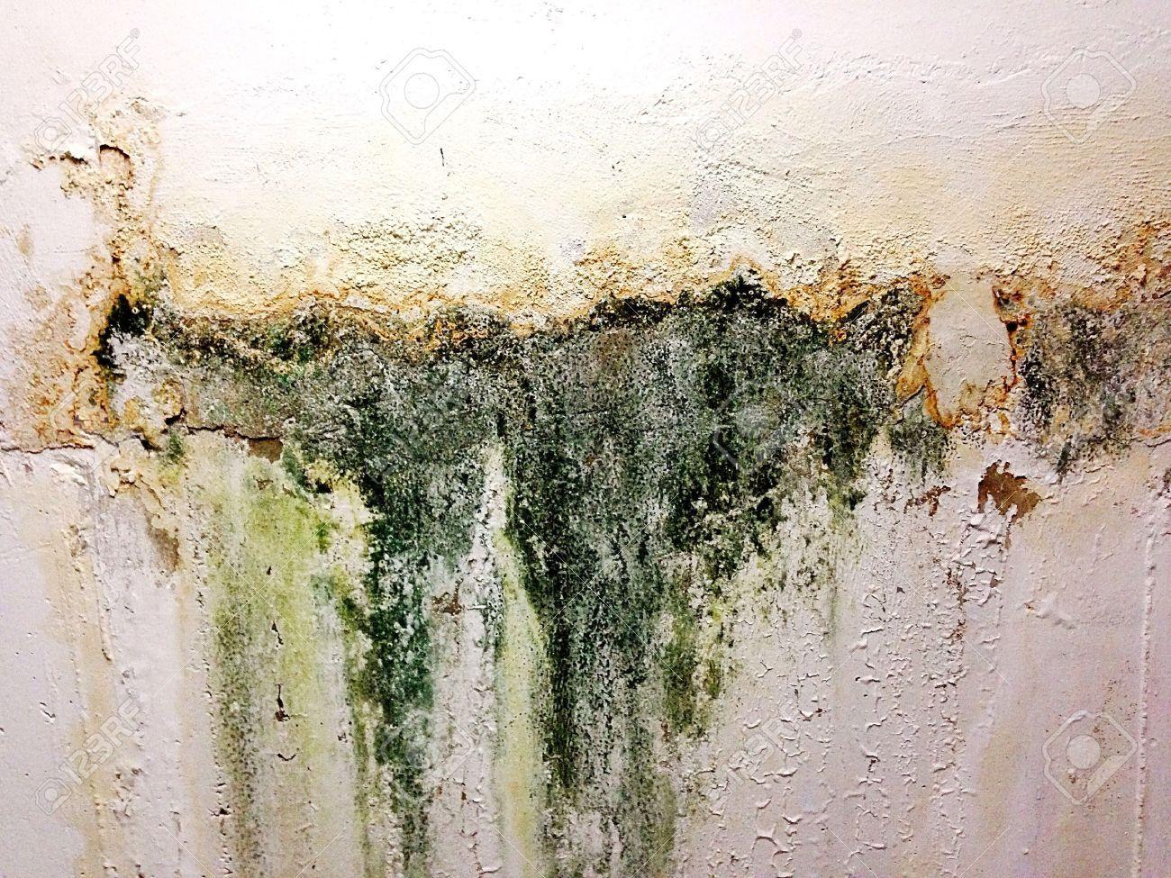 Image result for moldy wall | Mann, Charlotte | Pinterest ...