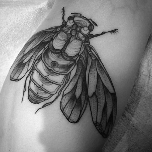 Kerry Burke Tattoos: Nomicheese: This Cicada Is Stoked To Be On K's Leg! Thanks