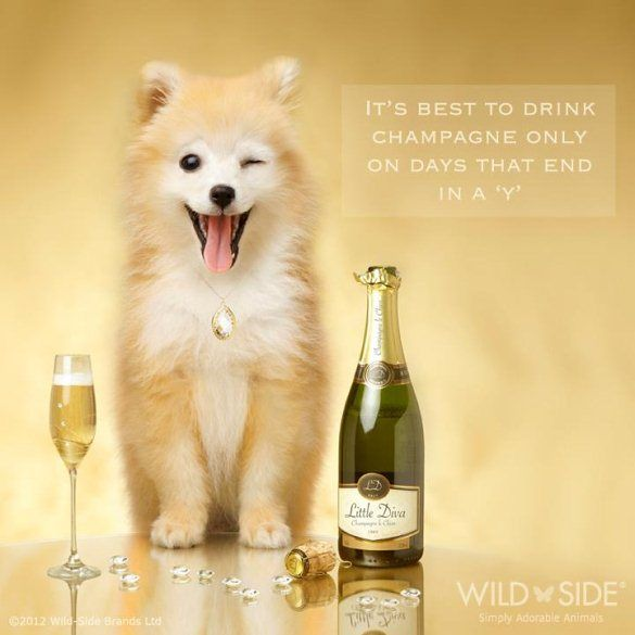 champagne quotes funny