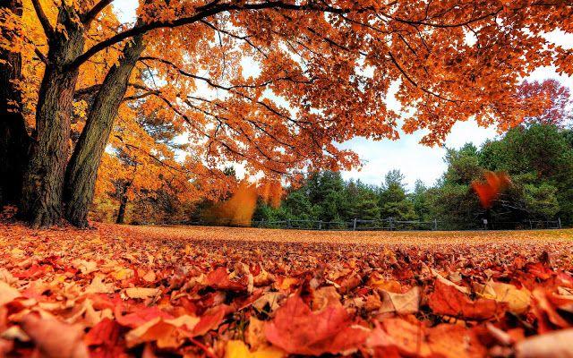 Inspiration Sensation Daun Di Musim Gugur Autumn Leaves Wallpaper Autumn Scenery Fall Leaves Background Autumn leaves wallpaper hd