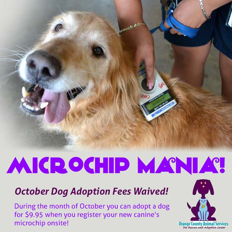 That's right! Adoption fees are waived, just register your