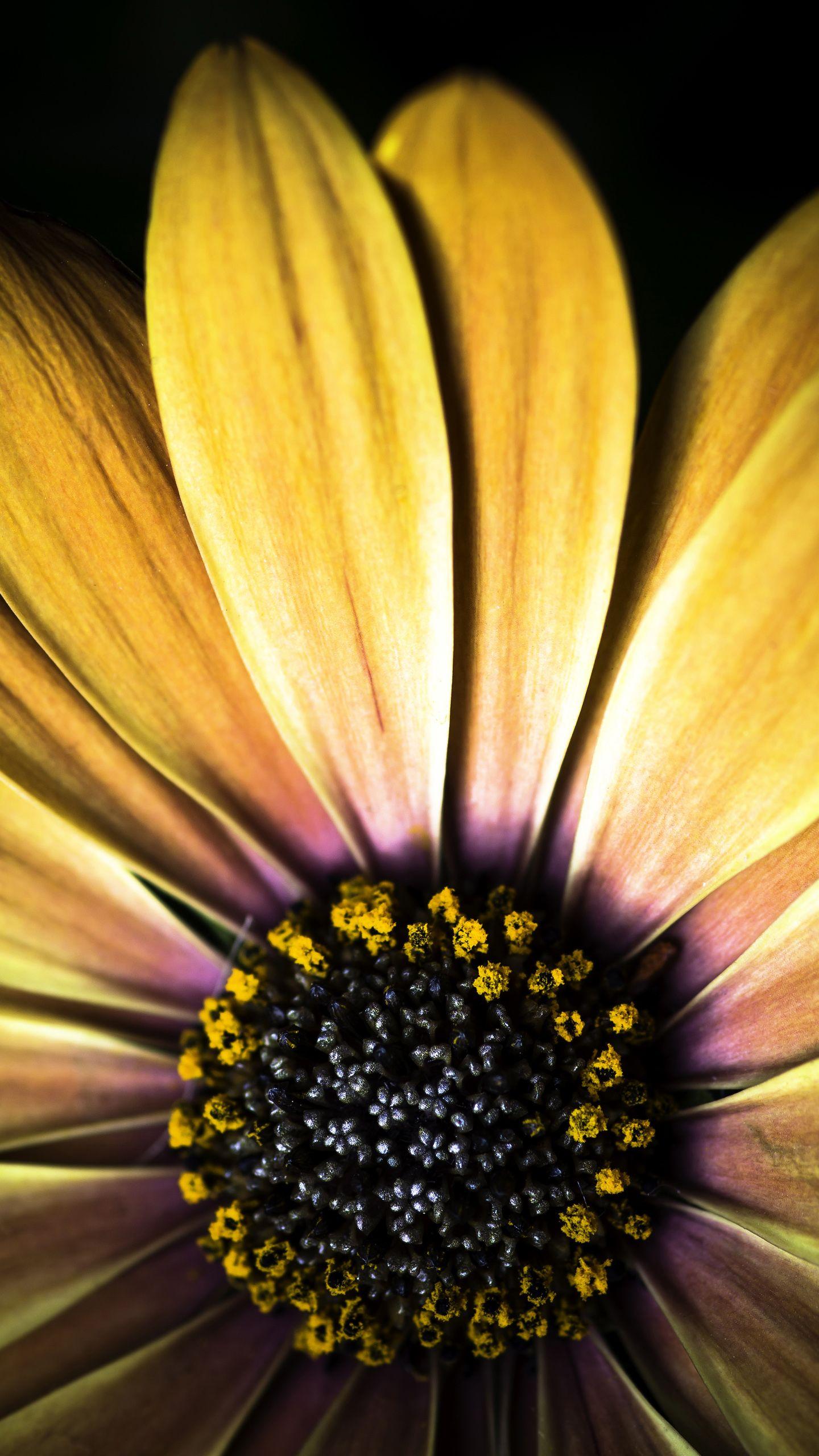 Big Yellow Flower Galaxy S6 Wallpaper 1440x2560 Yellow Flowers Wonderful Flowers Yellow Flower Wallpaper Fantastic yellow flower hd wallpaper