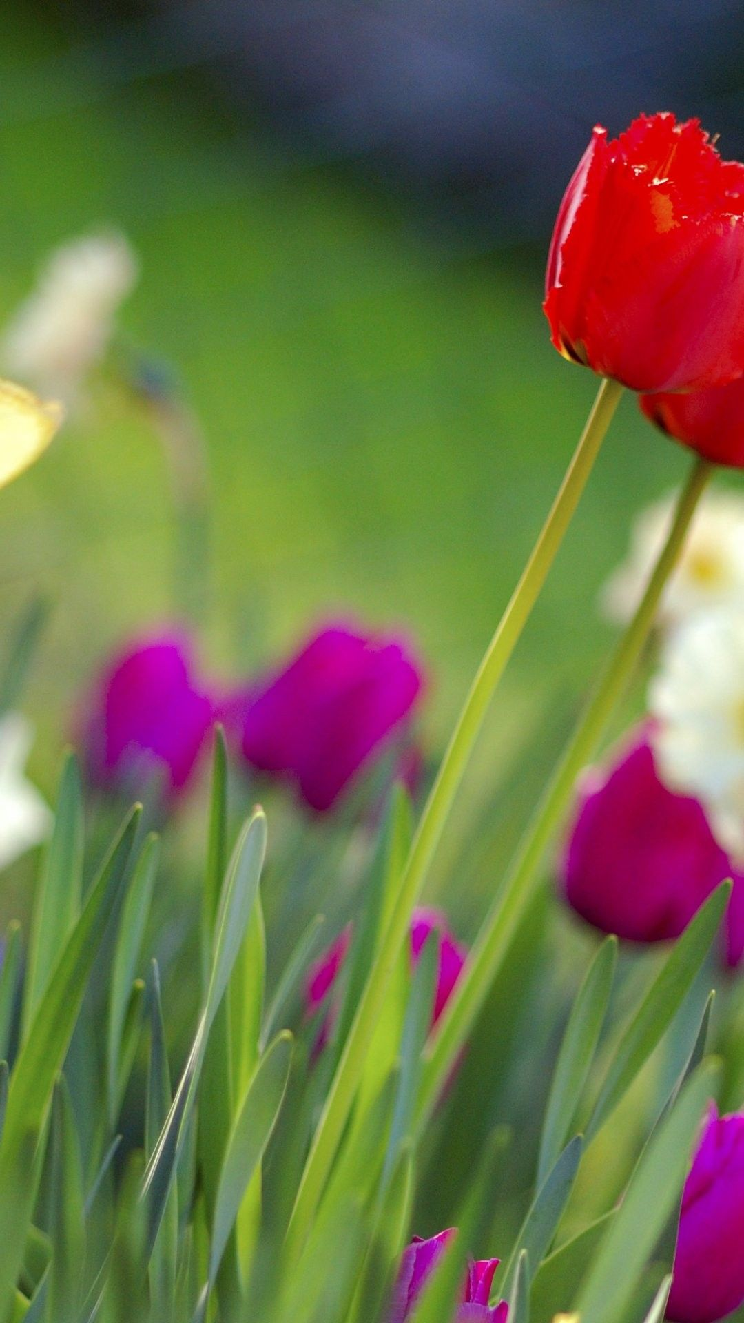 Colorful Spring Flowers Iphone 6 Plus Wallpaper 14119 Flowers