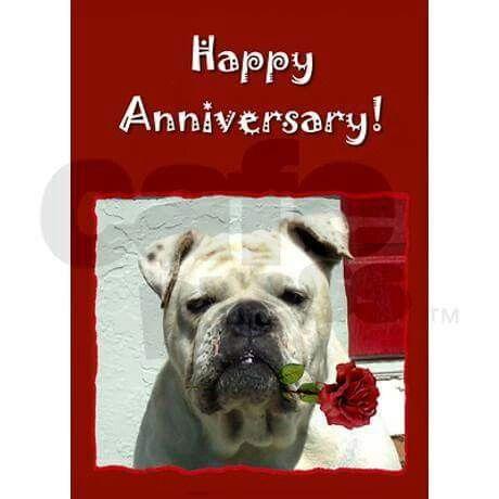 Happy Anniversary Bulldog Happy Anniversary Anniversary Holiday