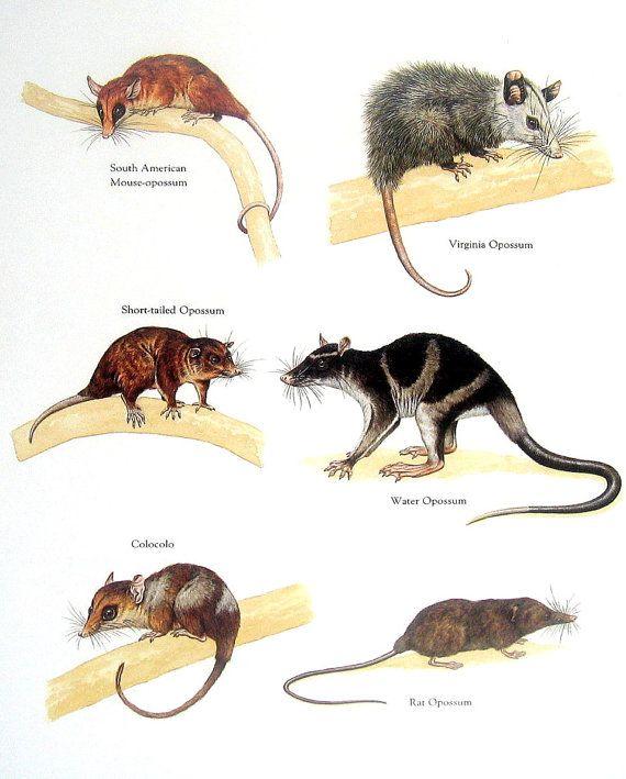 Pin By Gentlemen777 On Animals