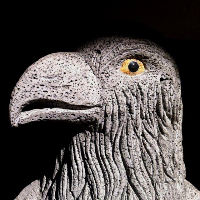 Eagle outside NY apartment.