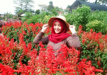 Wisata Taman Bunga Begonia Bandung