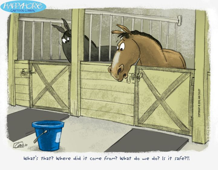 Pin By Jaclyn Chin On Humor Horse Cartoon Horses Horse Care