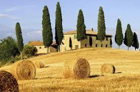 fattoria - Cerca con Google
