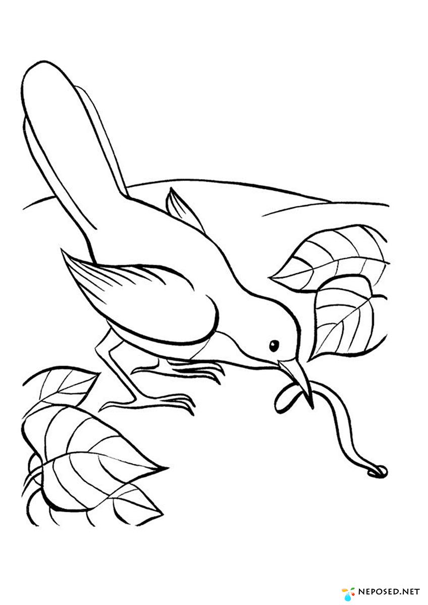 раскраска животные птицы насекомые рыбы как жемчужина грязи