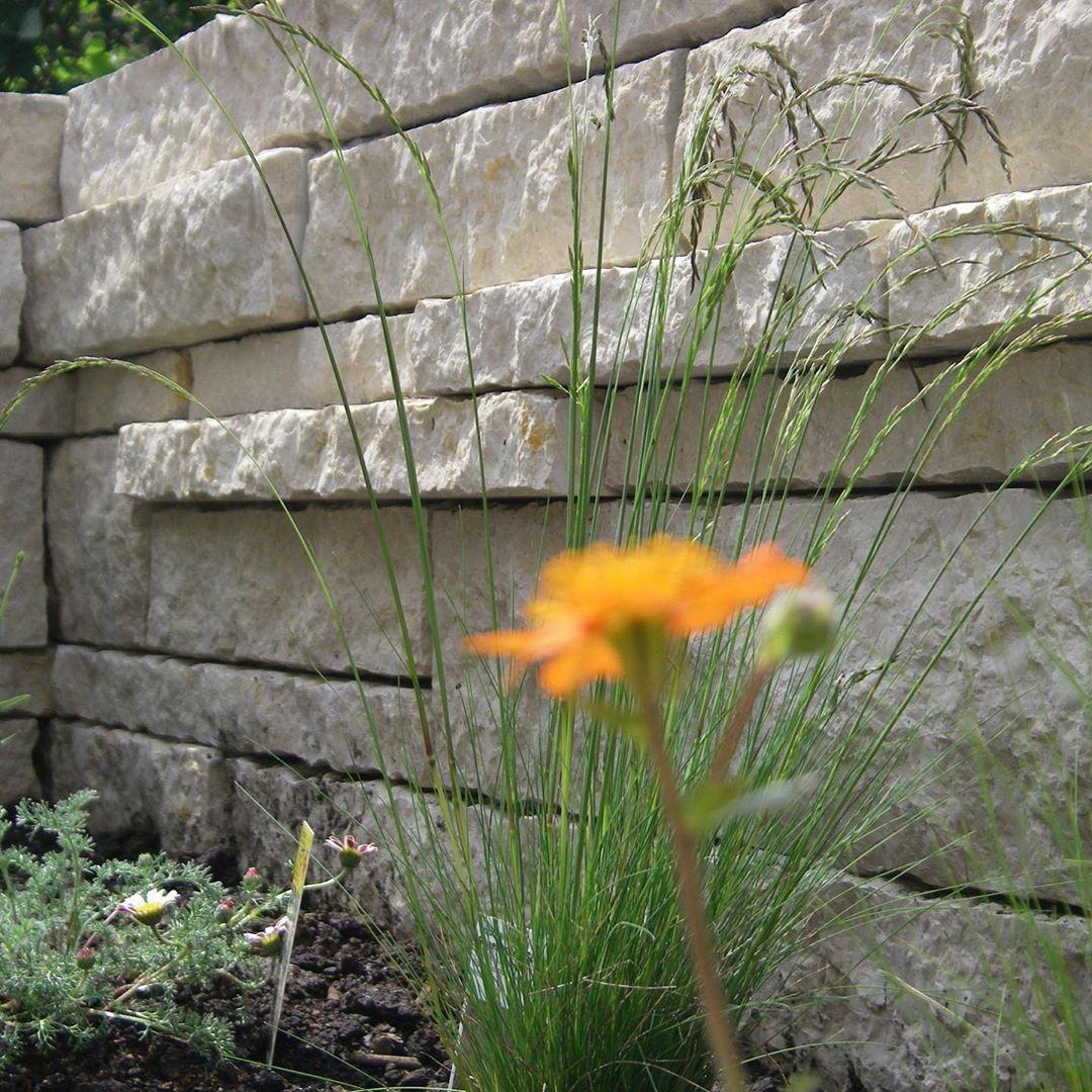 Lebendige Mauer Wir Geben Euch Hier Einen Kleinen Einblick In Unser Arbeitsfeld Laufende Oder Abgeschlossene Projekte Und Bieten Anre Plants Garden