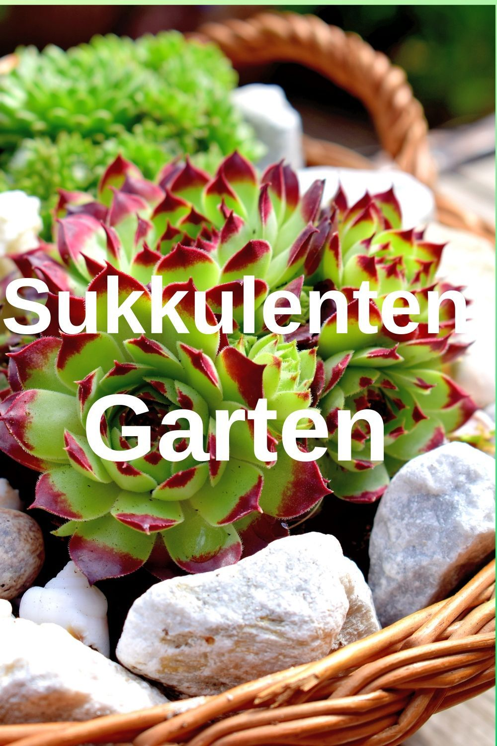Sukkulenten Arrangements