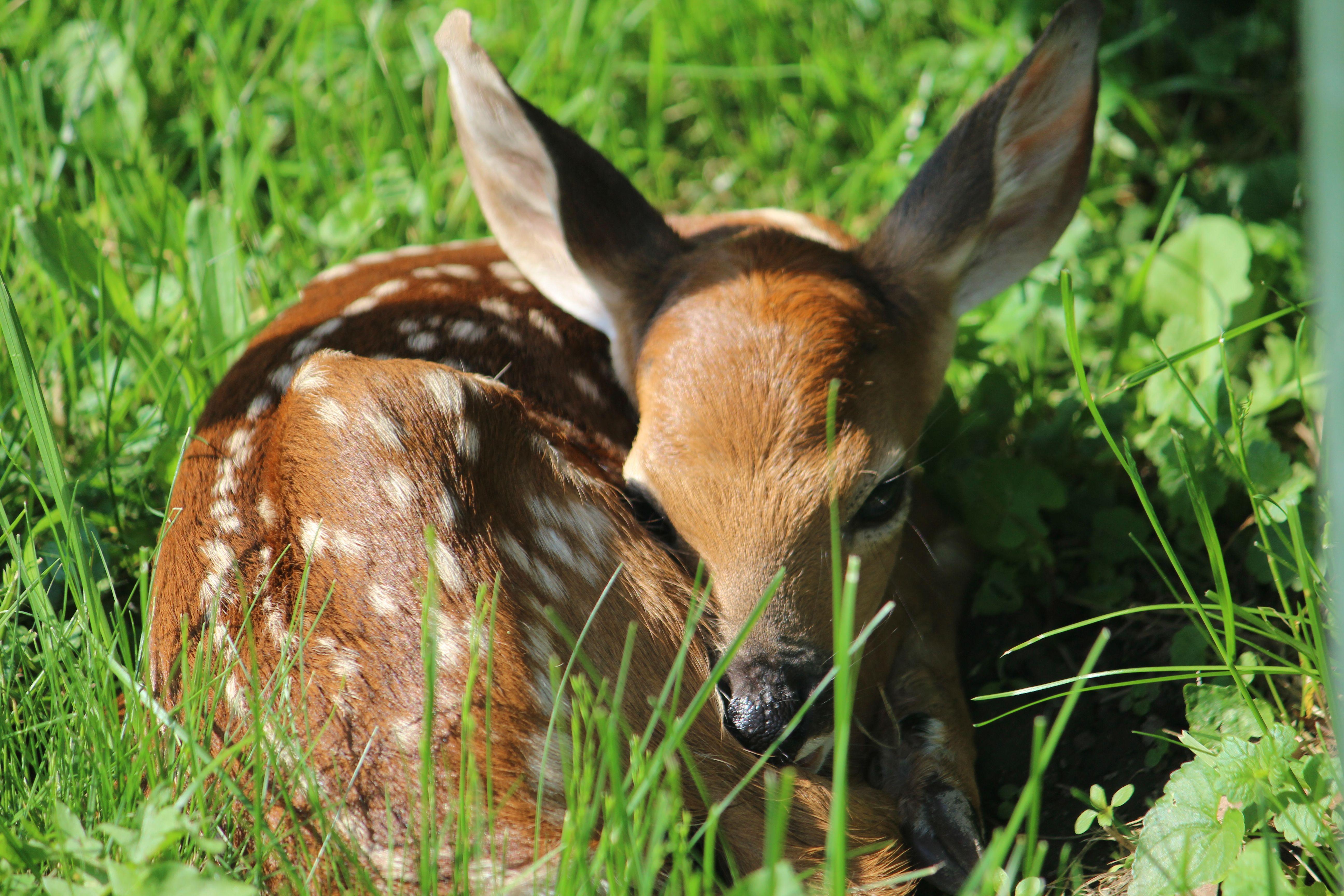 Our Baby Deer Baby Deer Animals Deer