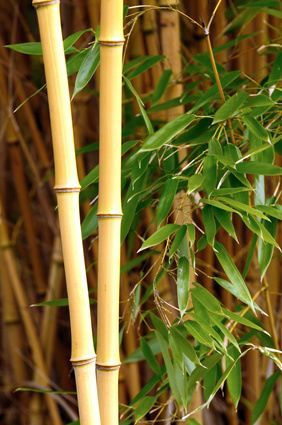 How To Start Your Own Bamboo Nursery Bamboo