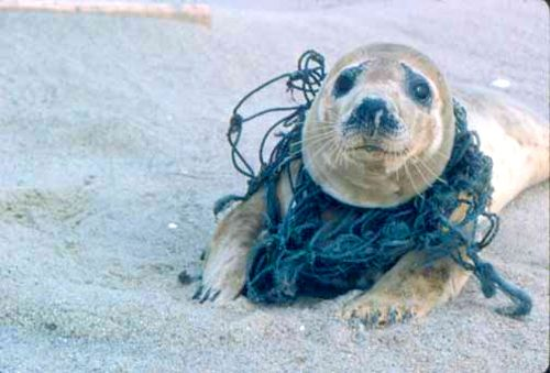 sea life pollution