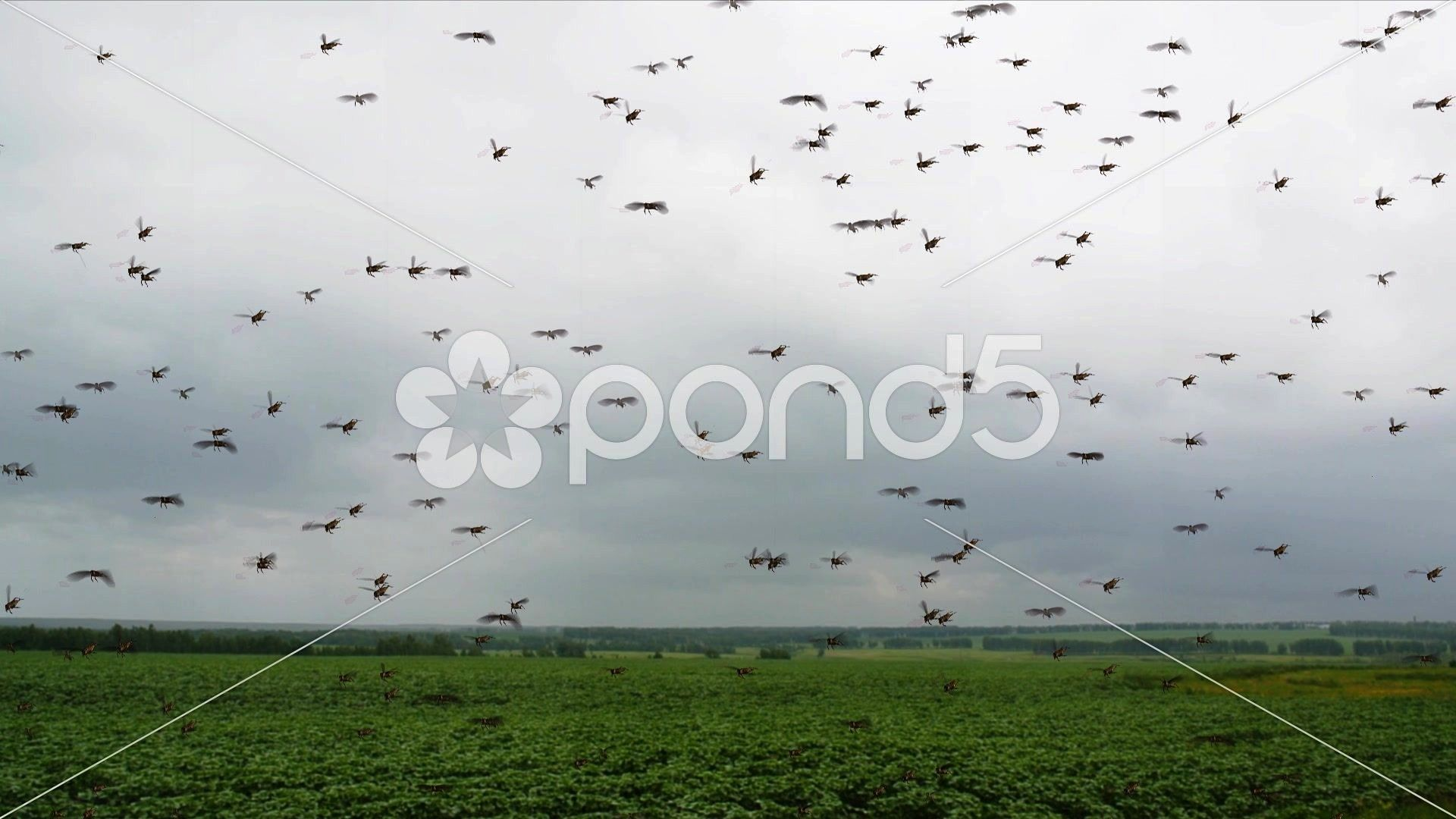 Swarm on the field Stock Footage SwarmLocustFootagefieldLocust Swarm on the field Stock Footage SwarmLocustFootagefield Weekly Inspiration Dose 063  Indieground Design Cr...