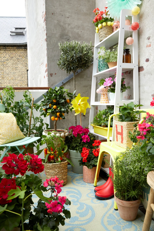 10 Pomyslow Na Kwiatowe Kompozycje Na Balkon Fot Pelargonium For Europe Kampania Europe In Bloom Mediterranean Plants Geraniums Colorful Flowers