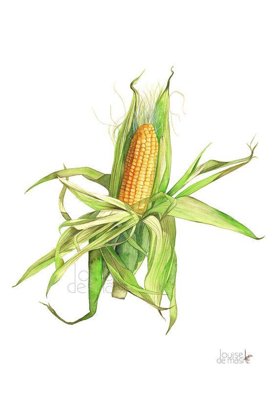 Corn Print Vegetable Print Vegetable Watercolor By Louisedemasi Vegetable Painting Corn Painting Fruit Painting