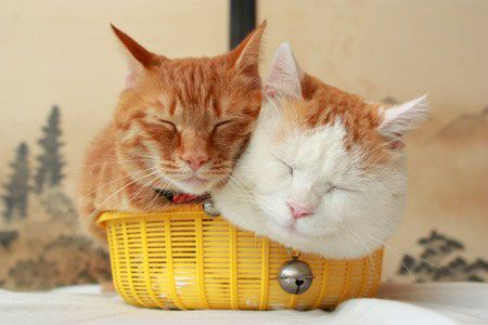 *Two kitties in the same basket is happiness and love.<3