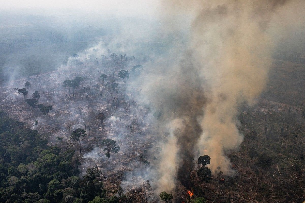 Lvmh Commits 11 Million To Combat Amazon Wildfires Read More