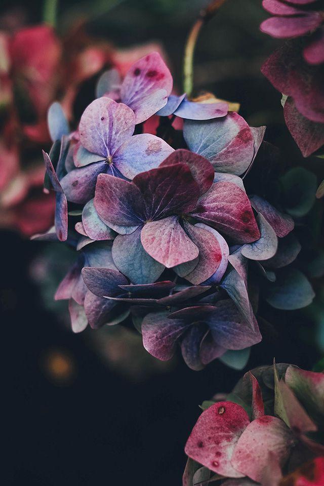 FreeiOS7 - nb94-flower-rainbow-color-dark - http://bit.ly/1rofAYD - freeios7.com