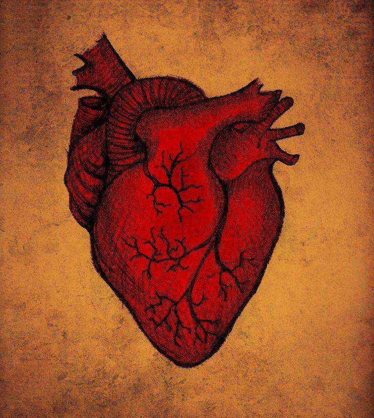 Znalezione obrazy dla zapytania blue red anatomical heart | Obrazki ...