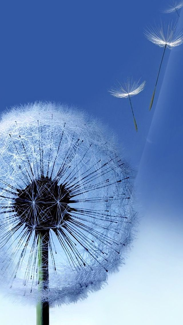 Iphone 5 Wallpapers Hd Retina Ready Stunning Wallpapers Gadgets Dandelion Flower