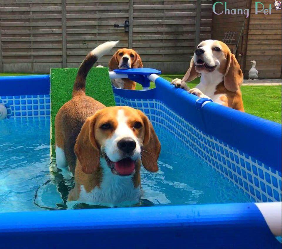 Beagle 5 Beagle Puppy Beagle Dogs