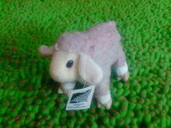 Aulana Sheep