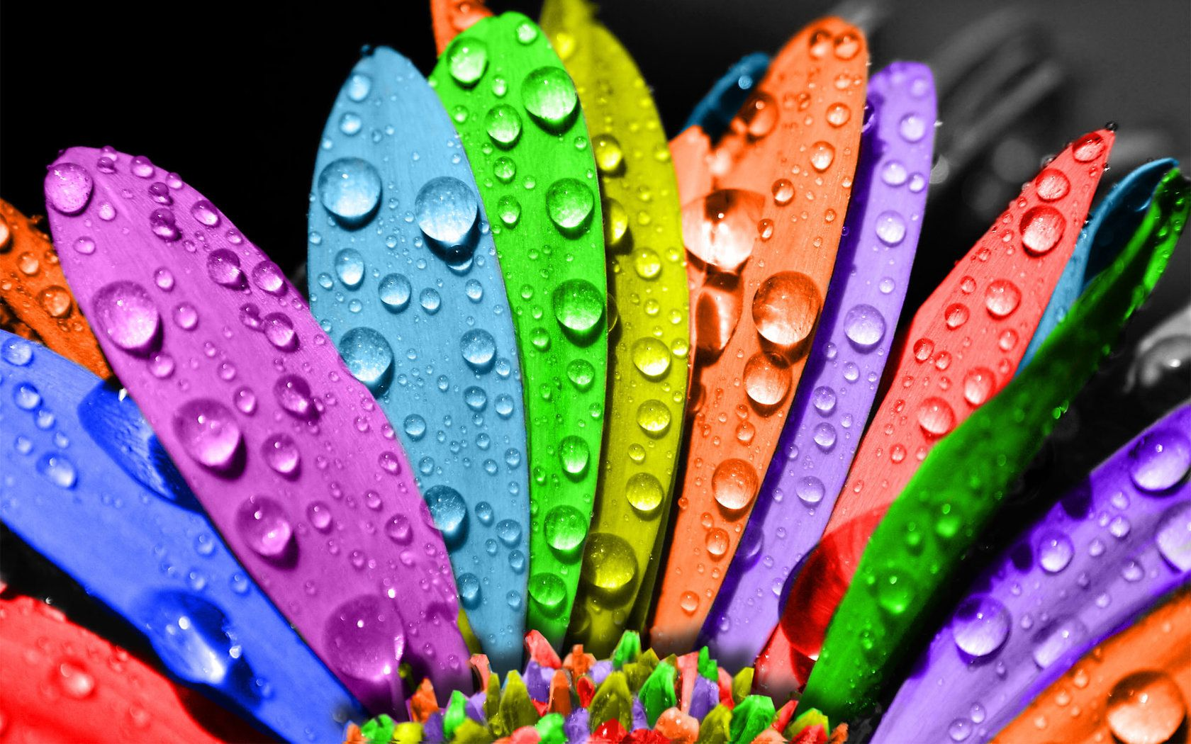 Beautiful Seven Colors Flowers Wallpaper With Images Wet