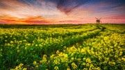 Landscape Painting Acrylic by Victoria Mishina