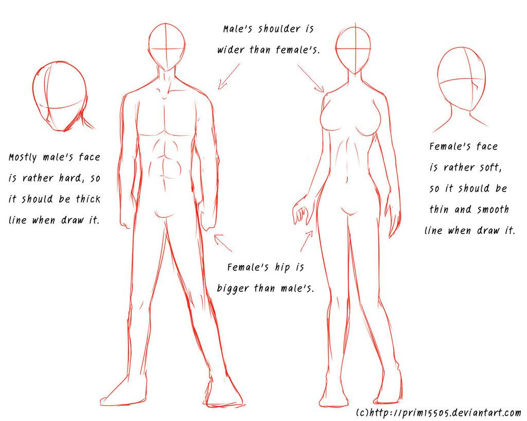 Tutorial - Male\'s and Female\'s Anatomy by prim15505.deviantart.com ...